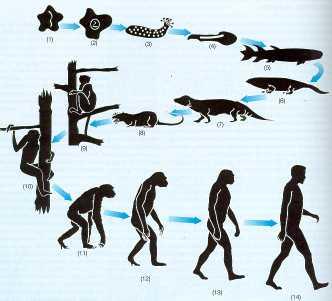 La evolución es parte del Deísmo