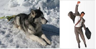 El perro, mejor raza que el humano